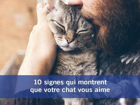 Chat vous aime